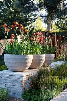 IRIS CONTAINERS_AT_THE_DAILY_TELEGRAPH_GARDEN_BEST_IN_SHOW_GOLD_MEDAL_CHELSEA_2010_D