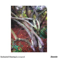 Enchanted Clearing, canvas print by ZoeSPEAK