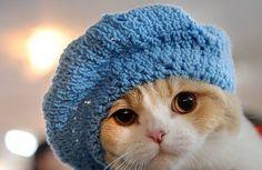 Gato usa gorro de tricô para feira