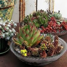 Image result for cactus and succulent in glass bowls
