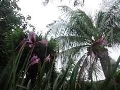 Árvores e flores no jardim.
