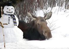 moose and snowman two of my favorite things!