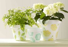 A painted pot full of flowers makes a lovely Mother's Day present. #marthastewartcrafts #mothersday