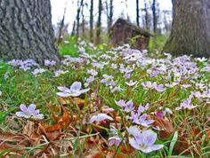 wildflower images - Google Search