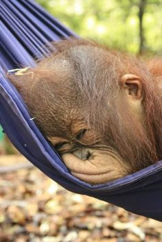 Luv tis hammock. ❤ ...tink I'll just stay here for a while.