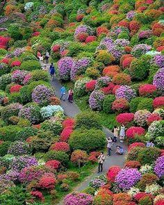 Vrstvené kuracie rezne. Keď som nevedala, čo urobiť moje rodine na večeru, skúsila som toto a každý ho miluje – radynadzlato.sk Amazing Gardens, Beautiful Gardens, Japanese Travel, Beautiful Flowers Garden, Colorful Garden, Parcs, Flowering Trees, Beautiful Landscapes, Botanical Gardens