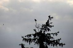 alone starling
