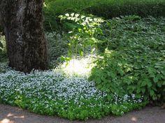 9 MARKTÄCKANDE PERENNER SOM HÅLLER OGRÄSET BORTA | Marktäckande perenner är några av de mest användbara växter som finns. På bloggen listar jag mina favoriter för olika lägen...