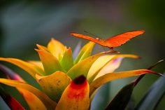#orange explosion #butterfly