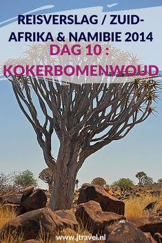 Dag 10 van mijn rondreis door Zuid-Afrika en Namibië is een lange reisdag met bezoeken aan het Kokerbomenwoud en Giant's Playground. Alles over deze lange tiende dag van mijn reis door Zuid-Afrika & Namibië lees je hier. Lees je mee? #namibie #kokerbomenwoud #giantsplayground #reisverslag #jtravel #jtravelblog