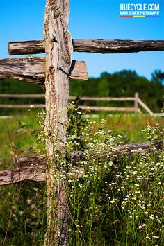Rustic fence post and white flowers
