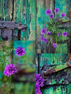 Purpletugboat (allbeautyallthetime: (via turquoise and purple /...)
