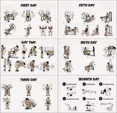 Muscle Building Workouts #workout #musclebuilding #fitness #health