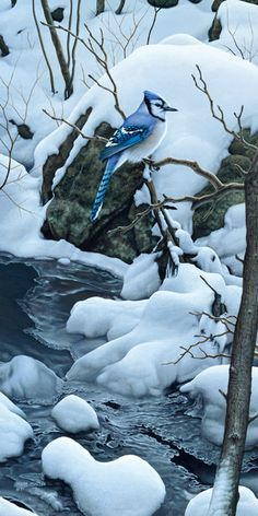 """Tranquil Morning"" Blue Jay   painting by Mark Mueller"