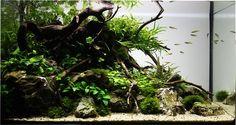 aquascape aquarium - Google Search