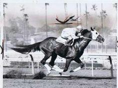 Tomy Lee. 1959 Kentucky Derby winner. Jockey: Bill Shoemaker. Winning time: 2:02 1/5