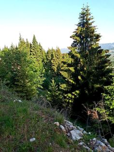 Visit the post for more. Mountains, Nature, Plants, Travel, Naturaleza, Viajes, Destinations, Plant, Traveling
