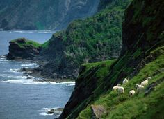 canadian national parks | gross-morne-shore-canada-national-parks_36793_600x450.jpg