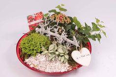love-22 arrangement with greenplants, Kalanchoë and decoration