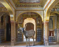 karen knorr photography india song - Google Search