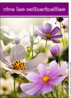 Carte Fleur violette, vive les catherinettes pour envoyer par La Poste, sur Merci-Facteur !