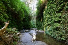 dear fern canyon, I miss you