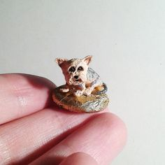 Tiny yorkshire terrier on the pebble stand  Micro by dearmoo
