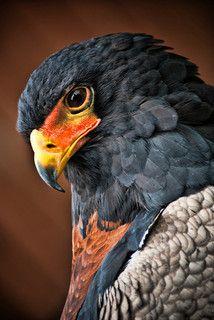 Colour Splendour   Flickr - Photo Sharing!