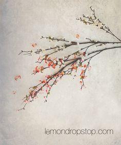 LemonDrop Stop Apple Blossoms | Canvas Photography Backdrops |