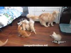 11 segundos videos de risa animales #compartirvideos.es #videosdivertidos #compartirvideos.es #videosdivertidos