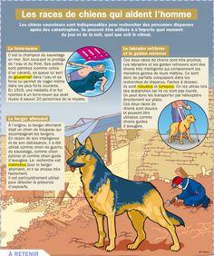 Fiche exposés : Les races de chiens qui aident l'homme
