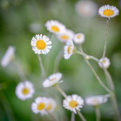 Wild Flowers | by Joseph W. Nienstedt
