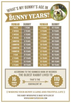 What's my bunny's age in rabbit years? A handy info graphic by BunnyEatsDesign.com