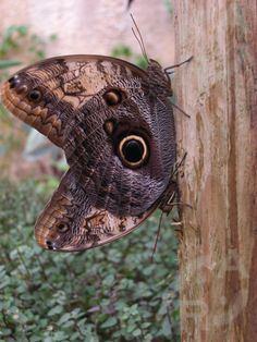 Puedes ver más fotografías en  http://www.flickr.com/photos/rubikt/sets/72157627577782506/