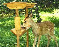 Auburn University Deer Feeder Design | Deer feeders, Deer ...