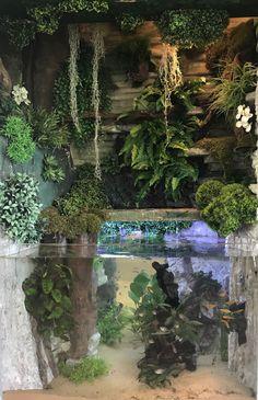 New Aquarium Terrarium Vivarium paludarium – aquascaping Planted Aquarium, Aquarium Terrarium, Aquarium Aquascape, Aquarium Landscape, Reptile Terrarium, Nature Aquarium, Aquariums, Vivarium, Paludarium