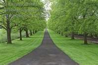 Tree lined driveway....Spring!