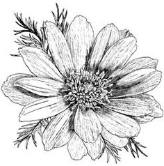 486335 Magenta Stempel Flowers | Magenta | Create4fun