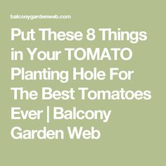 Put These 8 Things in Your TOMATO Planting Hole For The Best Tomatoes Ever | Balcony Garden Web