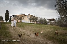 Chicken playing around at Kim & Lance's Tuscany countryside wedding.