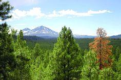 Three Sisters Wilderness area