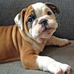 10 puppies that will make your heart melt, click the pic to see