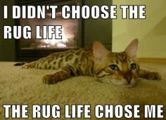 I know exactly how this kitty feels!