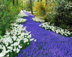 netherlands flowers - Αναζήτηση Google