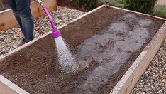 How to Grow Potatoes From Store Bought Potatoes - Gardening Channel Grow Potatoes, Planting Potatoes, Potato Gardening, Deep Winter, Food Staples, Fresh Vegetables, Garden Tools, Succulents, Channel
