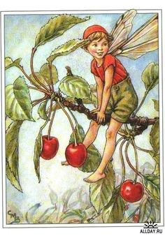 The Cherry Tree Fairy. Vintage flower fairy art by Cicely Mary Barker. Taken from 'Flower Fairies of the Trees'. Click through to the link to see the accompanying poem. Cicely Mary Barker, Flower Fairies, Fairy Land, Fairy Tales, Fairy Pictures, Vintage Fairies, Fantasy Illustration, Illustration Flower, Cherry Tree