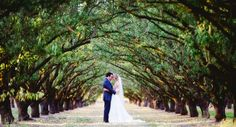 Orchard wedding, Lodi CA, green wedding Sacramento Wedding Photographers, Best Wedding Photographers, Portrait Photographers, Green Wedding, Our Wedding, Wedding Venues, Wedding Schedule, Wedding Planning, Wedding Photo Gallery