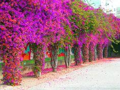Santa Rita fucsia y lila
