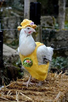 Taking knitting to the next barnyard level! Charity knitting pattern Chicken Coat by mypdfpatterns on Etsy, $2.00