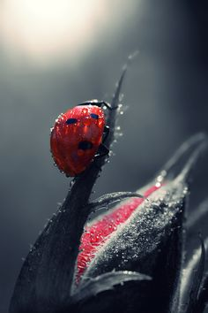 enantiodromija:  Red… and drops.. by Makis Bitos // 500px